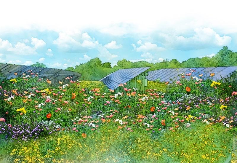 wild flowers and solar farm illustration