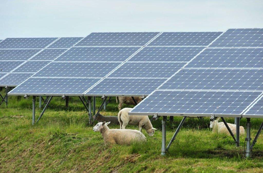 News update for Cuckmere Community solar